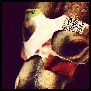 We all wear masks. Even my supercool dog, Shackleton.